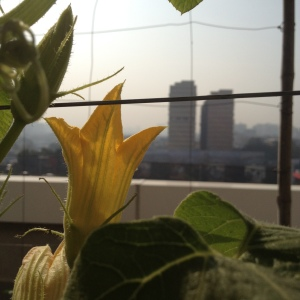 The view from the terrace garden.